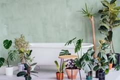 Rośliny w łazience – czy to na pewno dobry pomysł?